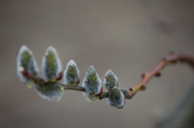 Obrzędy przywoływania wiosny – pierwszy dzień wiosny