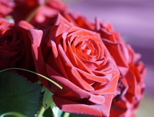 Dzień Świętego Walentego - Walentynki - 14 lutego