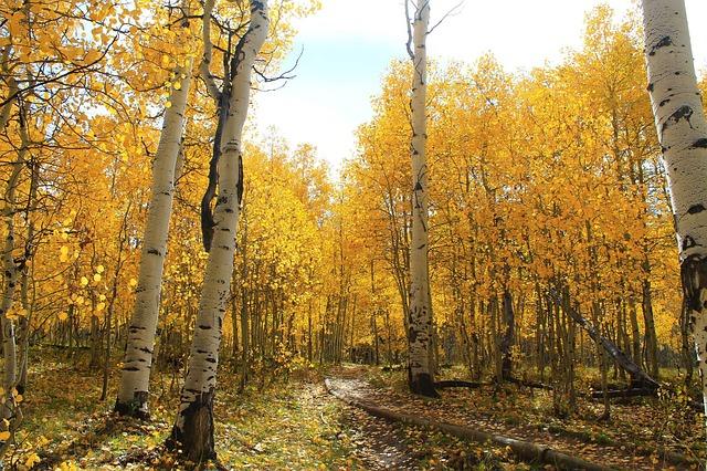 Jesienna nostalgia – jak jej uniknąć?